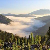 Залегли в долине белые туманы :: Сергей Чиняев