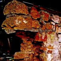 Живописные руины :: Евгений БРИГ и невич