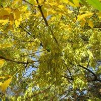 Золотой сентябрь.. :: Зинаида