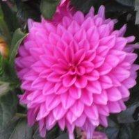 Ну и цветок! :: Дмитрий Никитин