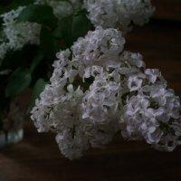 Воспоминания о весне .... :: Алёна Савина