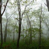 Влажный лес :: Марина
