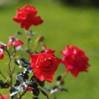 осенние цветы :: Андрей Игоревич