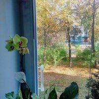 Осень у окна. :: Николай Масляев