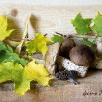 Лесные дары :: Лидия Суюрова