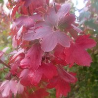 Букет осенних листьев :: Елена Семигина