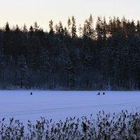 Зимняя Рыбалка :: Vyacheslav Gordeev