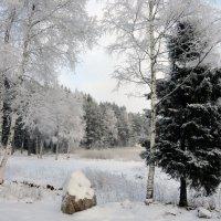Зимний лес :: Vyacheslav Gordeev