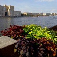 Москва-река :: Наталья Цыганова