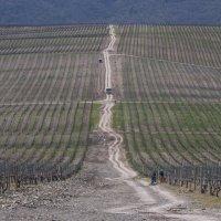 Виноградники :: Michael Mh MH100181