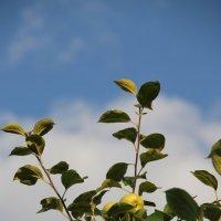 Яблок спелых аромат.... :: Tatiana Markova
