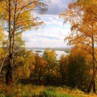 Осенним светом полна голова... :: владимир тимошенко