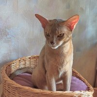 Маленькая львица сердится :: Liliya Kharlamova