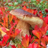 Белый гриб :: Олег Кулябин