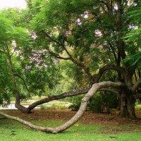 Раскидистое дерево. :: Liudmila LLF