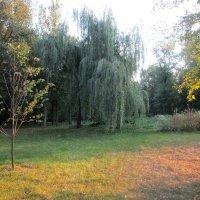 Осень в лучах заката :: Ольга Довженко