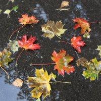 ...сбил листья дождь осенний.. :: Ольга Митрофанова