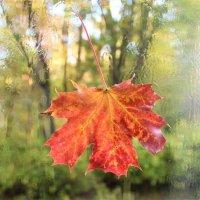 ...и плачет осень за окном.. :: Ольга Митрофанова