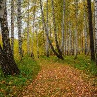 По дороге в осень :: Ольга Соколова