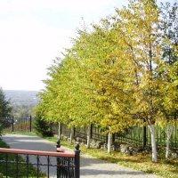 деревья у храма :: Иван Семин