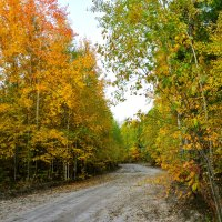 Осенний лес :: Наталья Жукова