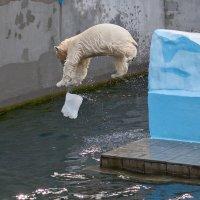 Белые медведи :: Владимир Габов