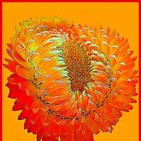 Цветы солнца 3 :: Владимир Хатмулин