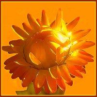 Цветы солнца 4 :: Владимир Хатмулин