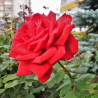 Последние цветы осени. :: Венера Чуйкова
