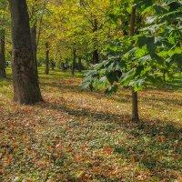 Осень :: юрий поляков