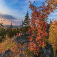 Алые гроздья рябин :: Vladimbormotov
