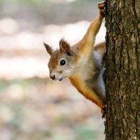Орешки принесли?! :: Сергей