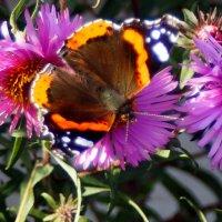 и ещё про бабочек 4 :: Александр Прокудин