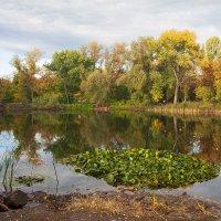 Осень в ботаническом саду :: Виктор Замулин