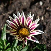 Цветок :: Cissa Andebo