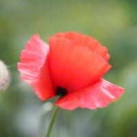 Летние цветы :: Иван Литвинов