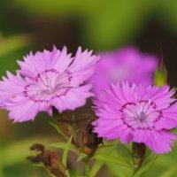 Про цветы :: Евгений Седов