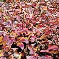 Радует красками осень :: Nikolay Monahov