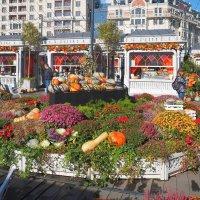 Рукотворная осень в центре города. :: Евгений Седов