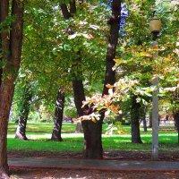 Шумят высокими кронами деревья нашего детства.. :: Гала