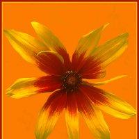 Цветы солнца 13 :: Владимир Хатмулин