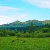весна в алтайских горах :: vladimir polovnikov