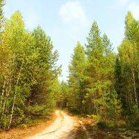 По лесной дороге :: Андрей Снегерёв