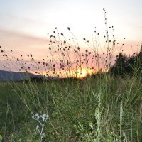 Ночная жизнь горных цветов Баян Аула...На вечерней зорьке... :: Хлопонин Андрей Хлопонин Андрей
