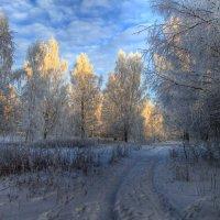 По зимней тропе :: Cергей Щагин