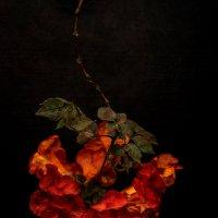 Цветное сердце :: Сергей Волков