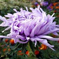 Осенние цветы ... :: Татьяна Котельникова