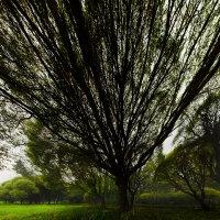 Когда деревья были большими :: Nika Polskaya