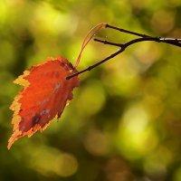 Осеннее настроение :: Ольга И