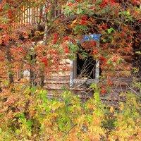 Заброшенный дом... :: Александр Широнин
